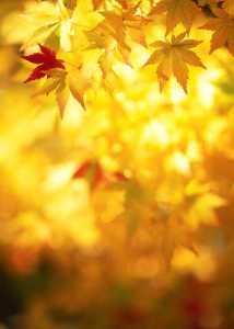 Solen skiner på höstlöv